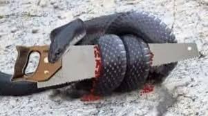 snake and saw